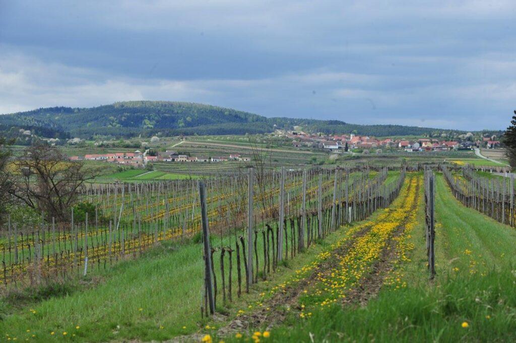 Mittelberg-und-Weingarten